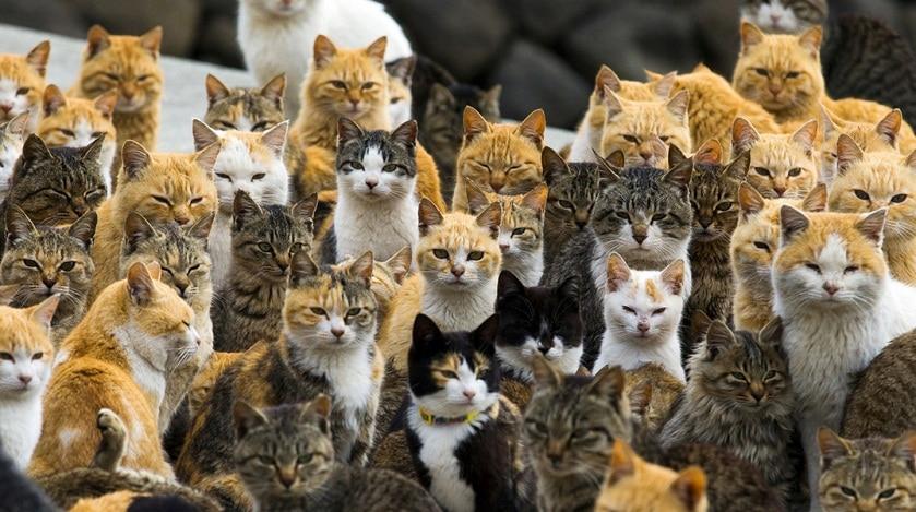 Aoshima sau Insula Pisicilor. Insula Aoshima din Japonia are mai multe pisici decat oameni. FOTO
