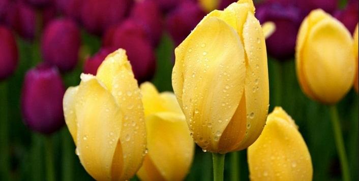 MESAJE DE FLORII 2015. Cele mai frumoase mesaje si SMS-uri pe care sa le trimiti de Florii celor dragi