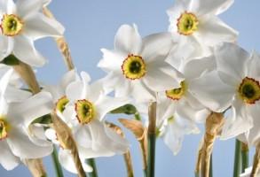 Prognoza meteo pana pe 1 aprilie. Ce temperaturi anunta ANM pentru inceputul de primavara