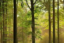 Sistemul german de exploatare forestiera, un model de studiat