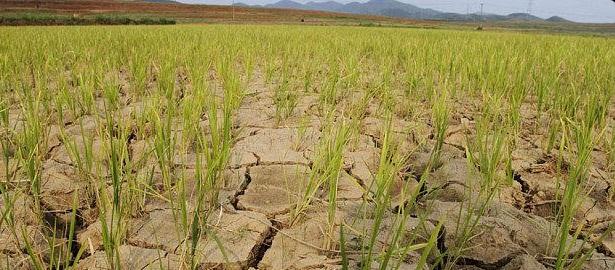 Coreea de Nord se confrunta cu cea mai crunta seceta din ultimul secol