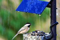 Alerta meteo Cod Portocaliu de ploi abundente si descarcari electrice pana marti