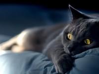 Pisicile si omul. Studiul care arata ce-si doresc de fapt pisicutele