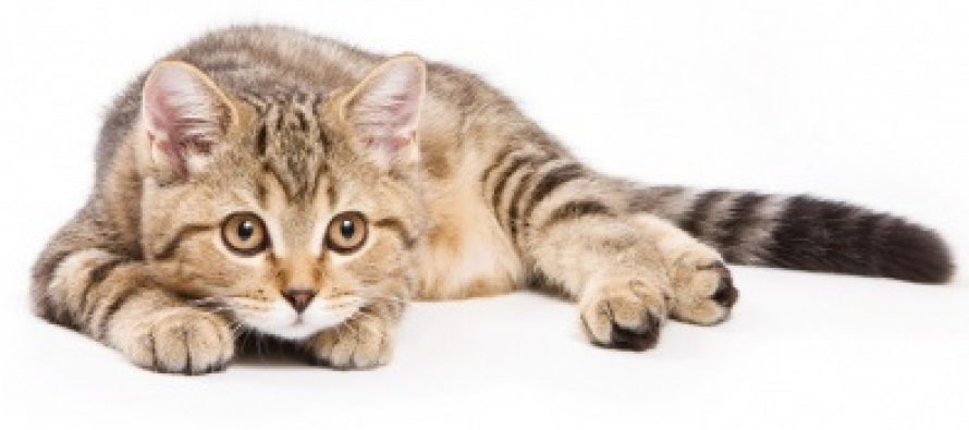 CAND VISEZI PISICI. SEMNIFICATIE VISE in care apar pisici in diferite ipostaze