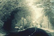Alerta de vreme rea de 1 Decembrie, cu viscol in zonele de munte