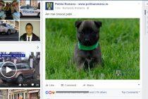 Catelul Politiei Romane, vedeta pe Facebook. A strans mii de Like-uri in doar cateva ore