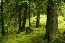 Garda Forestiera angajeaza 600 de persoane pe salarii de peste 5.000 lei NET. Ce test vor da candidatii