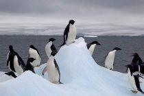Antarctica a depasit pentru prima data 20 de grade Celsius