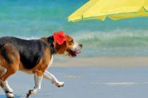 Atentie, reguli noi pe litoral! Vei fi amendat daca intri pe plaja cu cainele sau cu masina