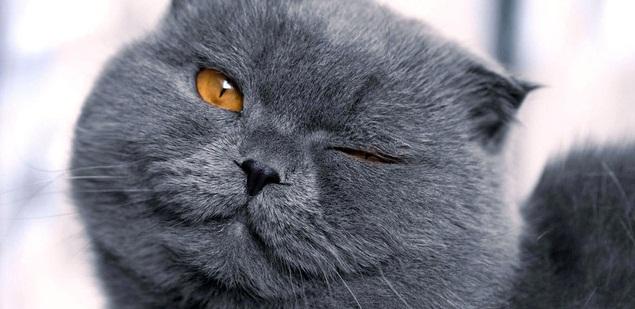 Pisicute din toata lumea la Expozitia Internationala Felina de Primavara – SofistiCAT