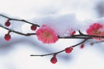 Vremea pana pe 10 Martie – ANM a anuntat prognoza meteo la nivelul intregii tari pentru inceputul de primavara
