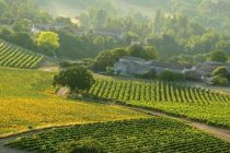 Ministerul Agriculturii a anuntat ca se incepe plata in avans a subventiilor in agricultura