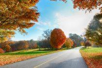 Prognoza meteo pana pe 8 octombrie. Toamna isi intra in drepturi, temperaturile scad simtitor la inceput de octombrie