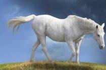 CE INSEAMNA CAND VISEZI UN CAL? Calul, simbol al puterii fizice si chiar al virilitatii