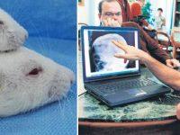 Un chirurg italian a facut un transplant de cap la sobolani si se pregateste sa faca unul la oameni