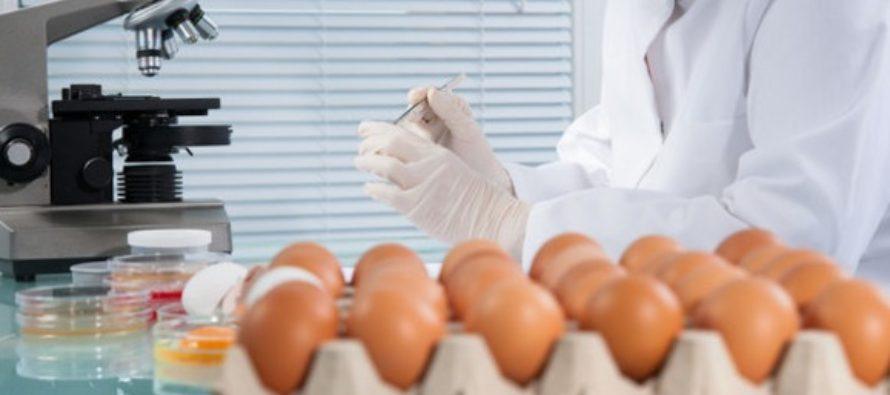 Oua cu fipronil si in Romania. Comisia Europeana avertizeaza ca cel putin 15 tari europene au primit milioane de oua contaminate