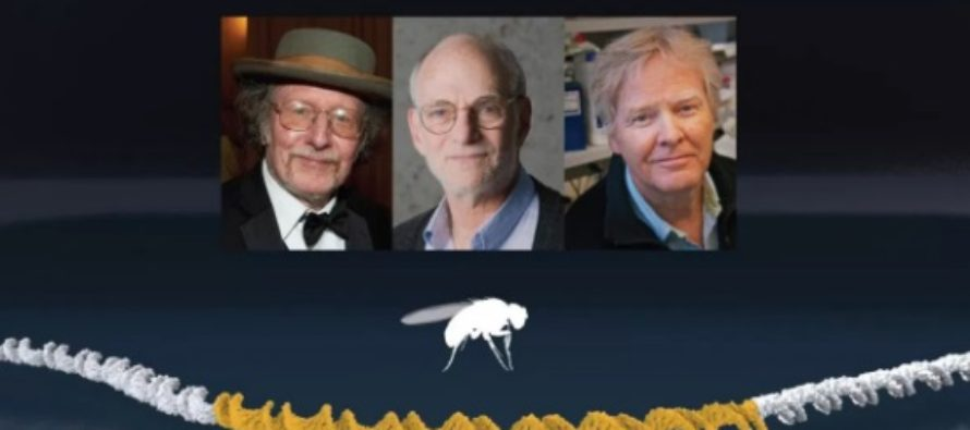 Premiul Nobel 2017 pentru Medicina a fost castigat de Jeffrey C. Hall, Michael Rosbash si Michael W. Young