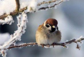 VREMEA IN DECEMBRIE 2017 SI IANUARIE 2018. Iarna naprasnica, cu temperaturi ce pot cobori la -30 grade Celsius in ianuarie