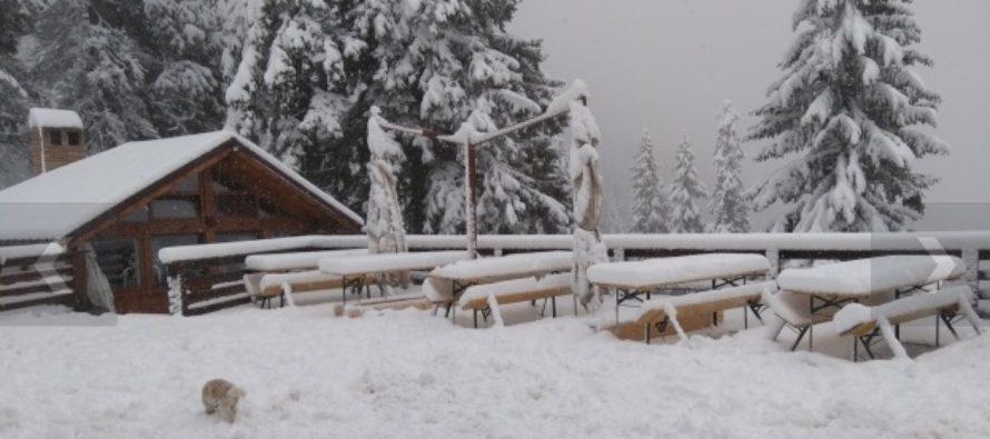 A nins in zona de munte a Romaniei, la Cabana Postavaru zapada depaseste 20 cm. Meteorologii anunta ninsori la munte si in urmatoarele zile