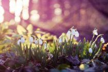 Prognoza meteo pentru februarie, martie si aprilie 2018 – Estimarea anuntata de ANM pentru primavara