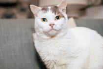 Theo este pisica anului 2018 in Marea Britanie. Motanul i-a salvat viata stapanei sale