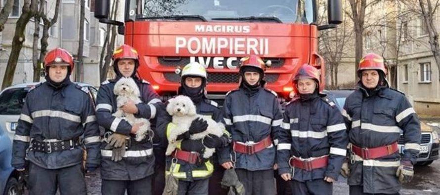Un caine a devenit vedeta in Timisoara, dupa ce si-a salvat familia si vecinii de la o tragedie in noaptea de Craciun