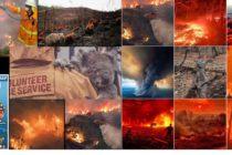 Apocalipsa in Australia! Incendiile au ucis aproape 500 de milioane de animale si pasari
