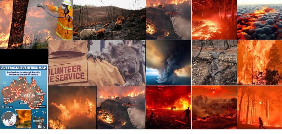 Apocalipsa in Australia! Incendiile au ucis aproape 500 de milioane de animale si pasari. FOTO
