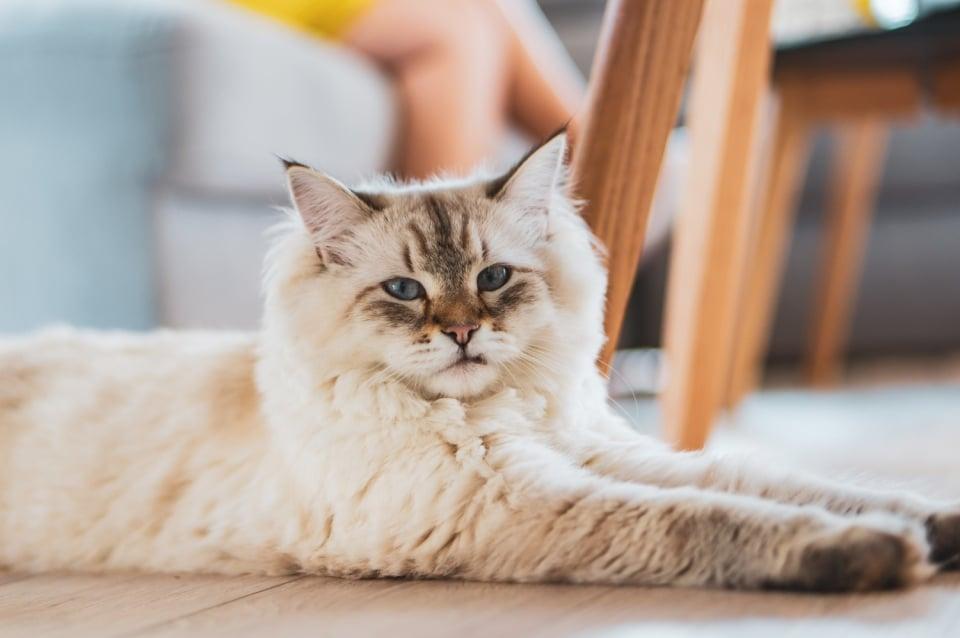 Alimente interzise pentru pisici
